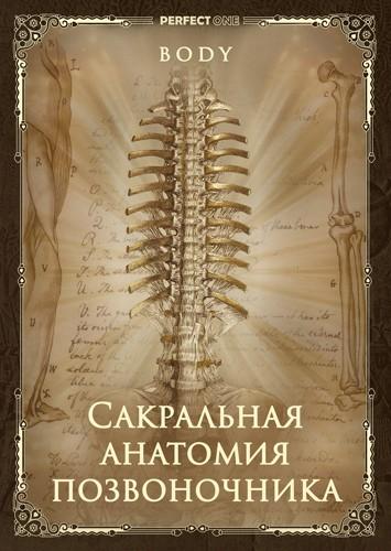 Сакральная анатомия позвоночника