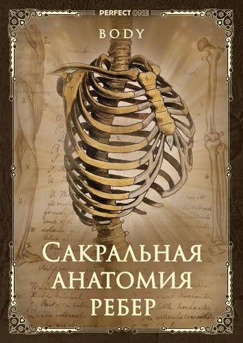 Сакральная анатомия ребер