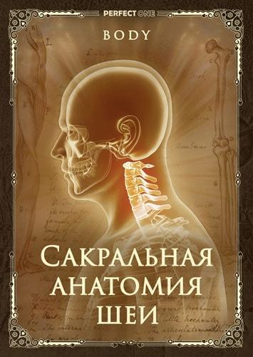 Сакральная анатомия шеи