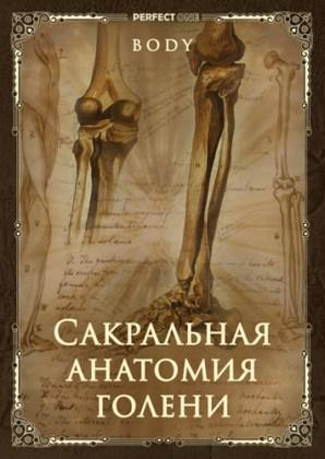 Сакральная анатомия голени